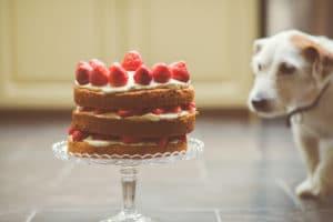 Τοξικές τροφές για το σκύλο γλυκά