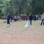 Εκπαίδευση σκύλων-Αμπελόκηποι