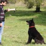 Εκπαίδευση σκύλων φωτογραφίες