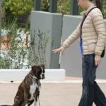 Εκπαίδευση σκύλων βασική υπακοή