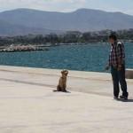 Εκπαίδευση σκύλων-Ελληνικό