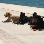 Εκπαίδευση σκύλων-Ραφήνα