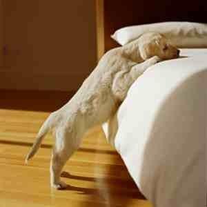 Puppy-bed