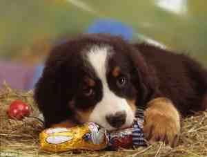 Photo of Ταξιδι με το σκυλο για τις πασχαλινες διακοπες 7 συμβουλες