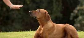 Εντολές βασικής εκπαίδευσης σκύλων
