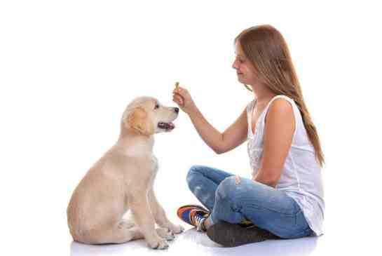 Πότε ξεκινά η εκπαίδευση ενός σκύλου