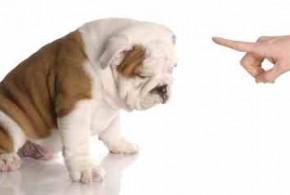 Εκπαίδευση σκύλων συμπεριφορά