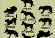 γλώσσα σώματος των σκύλων