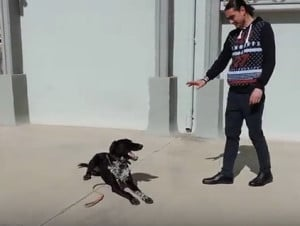 Χαρίζεται εκπαιδευμένος σκύλος